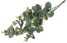 eucalyptus-stilk-